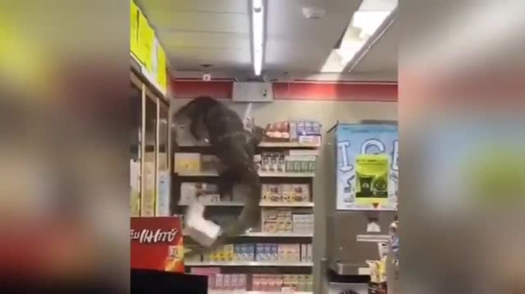 Thailand's Godzilla Vaccine Now Being Rolled Out in Grocery Stores!